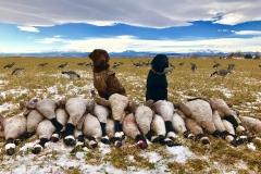 Colorado_Goose_Hunting_Dogs