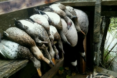 duck_hunting_birds_and_bucks_outdoors