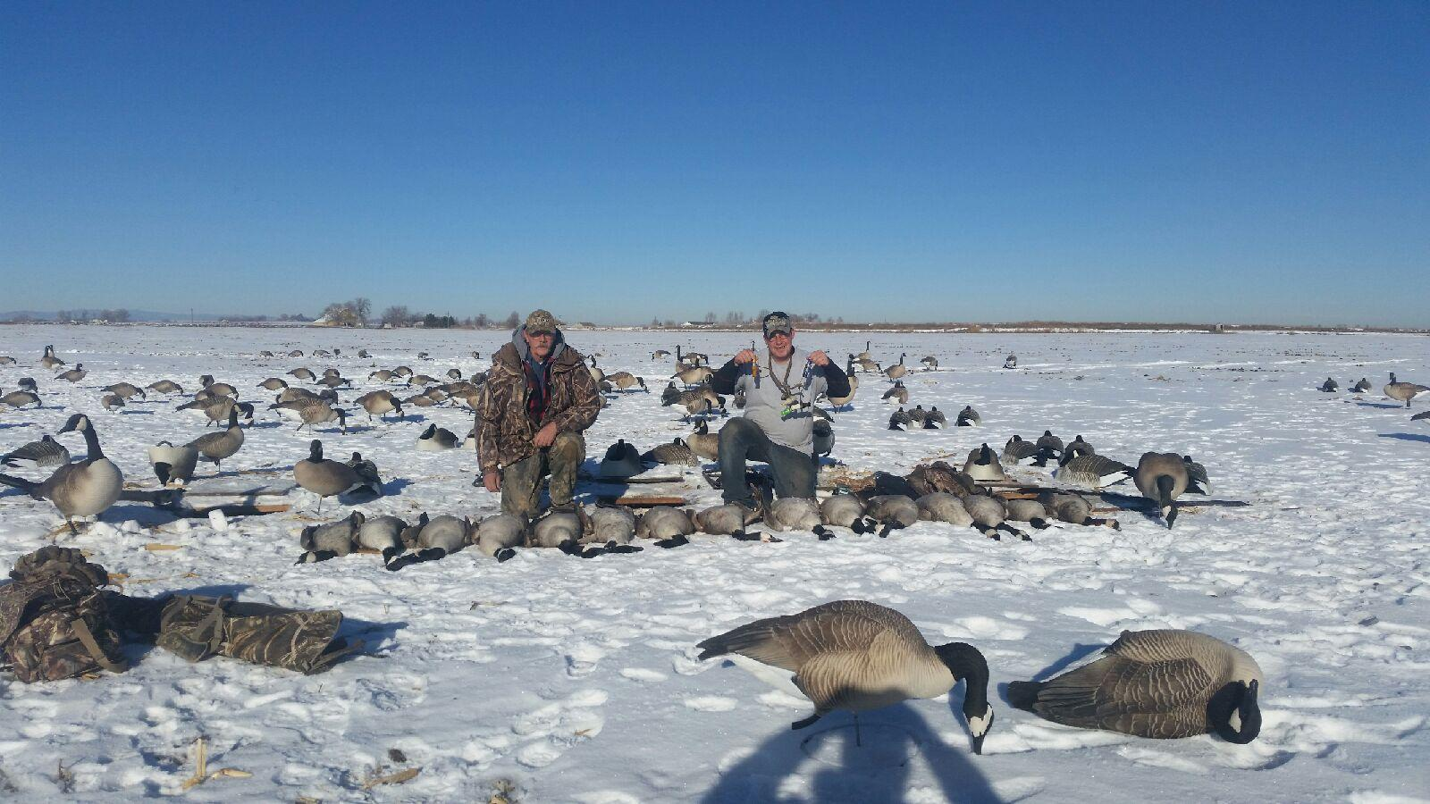 Canada-Goose-Hunting-Colorado